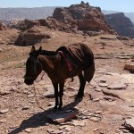 Petra_Jordan_Middle_East_TravelXena_104