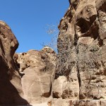 Petra_Jordan_Middle_East_TravelXena_298