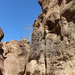 Petra_Jordan_Middle_East_TravelXena_299