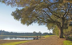 Small Of Coast Live Oak