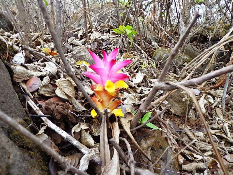 Fort Visapur - wild flowers