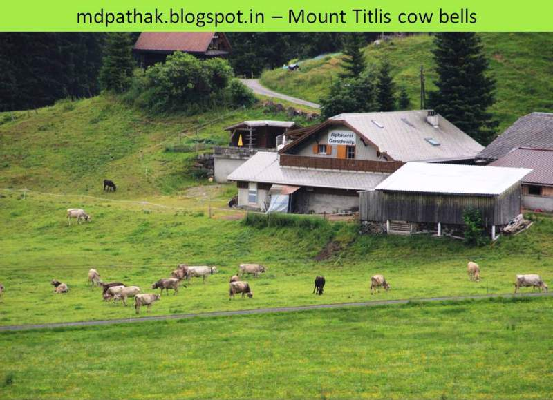 cow bells at mount titlis