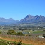 Wine + Beer in Stellenbosch