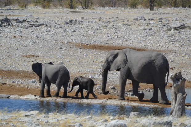 elephant_momteenbaby