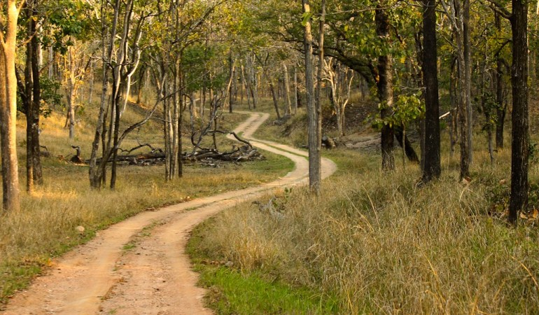 Hunting the Elusive Tiger in Pench