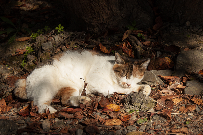 "A ""philosopher"" cat lazing about in the sun"