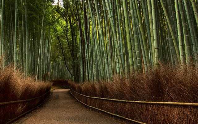 The Magical Bamboo Forest of Arashiyama