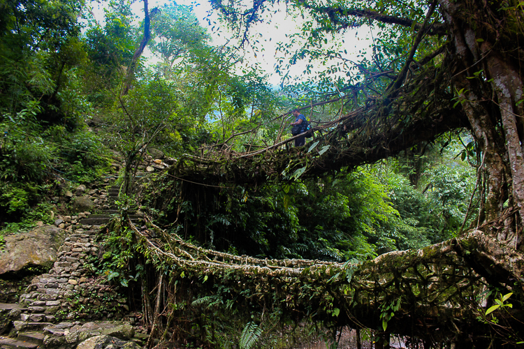 Double decker root bridge of Nongriat (Picture courtesy: Medarisha Lyngdoh)