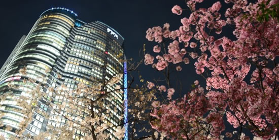 桜img003