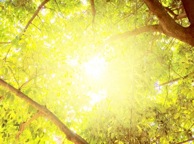【世界一受けたい授業】マインドフルネスとは?1日10分の簡単瞑想でうつ病・ストレス改善方法