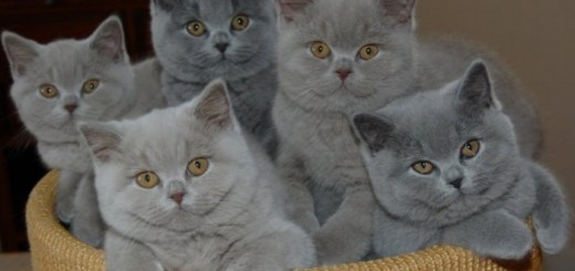 These are the Most Popular Internet Cats