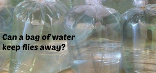 Do flies irritate you? Try water bags and keep them away