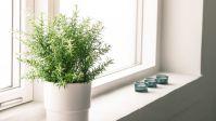 Wie viel Licht brauchen unsere Zimmerpflanzen? - Trendomat.com
