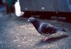 鳩の糞に要注意