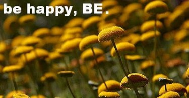 being-happy-quote_tolstoy