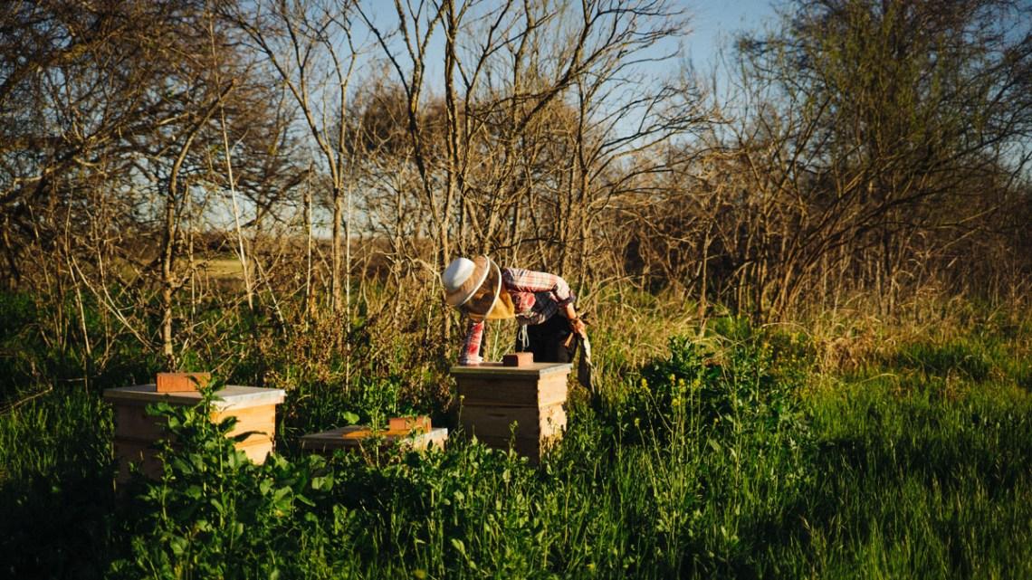 Tribeza Bees spread 8