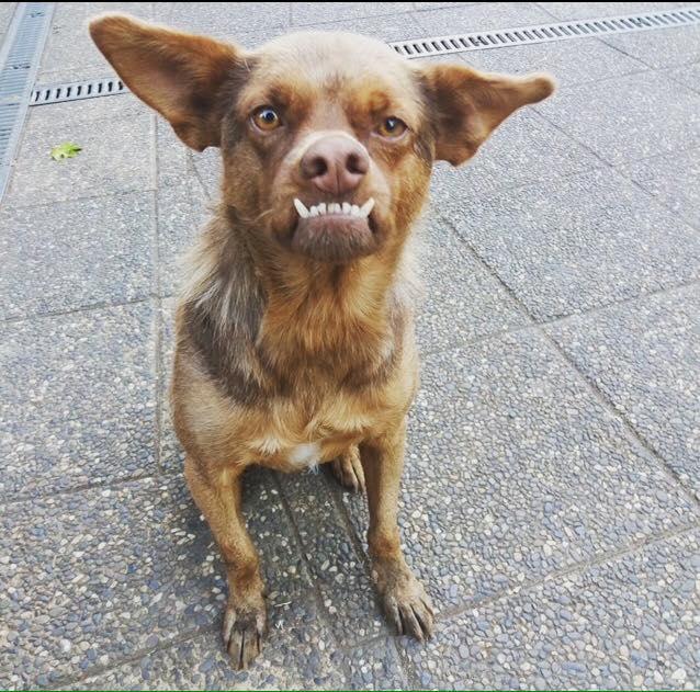 Pug Iphone Wallpaper Conoce La Triste Historia Del Famoso Perro Chilaquil