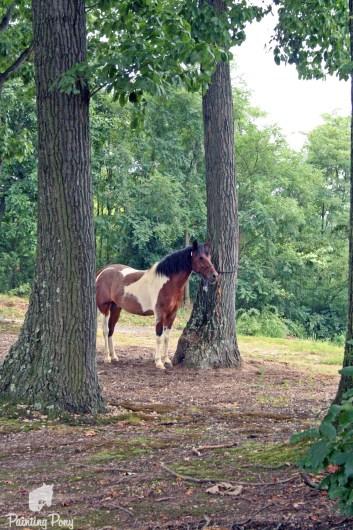 tieing ponies