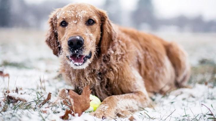 foto-van-een-spelende-hond-met-bal-in-de-sneeuw-hd-honden-wallpaper