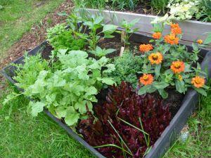 Nederste terrasse: Paprika, salat, ruccola, reddik, mer salat, zinnia
