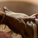 This Sunday at Trinity:  Jesus Washes the Disciples Feet