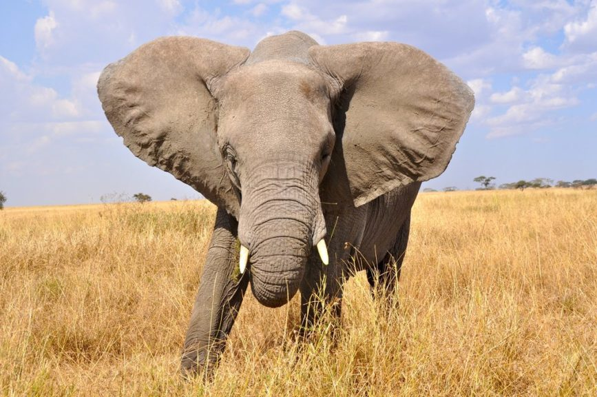 Awesome Animal Wallpapers Tanzania Safari Photos