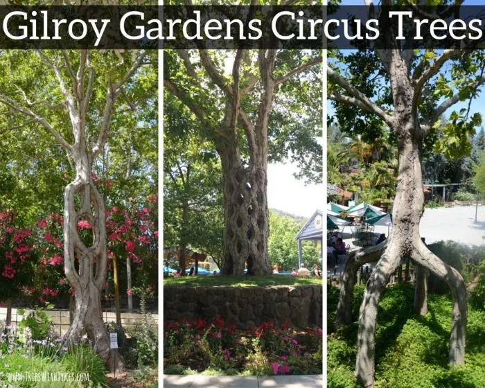Gilroy Gardens Review The Best Little Amusement Park You