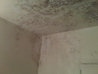 How To Get Rid Of Mold In Bathroom Ceiling  Review Home Decor