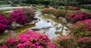 Một góc vườn theo phong cách Á châu gợi nhớ về đồi thông và hoa Đà Lạt