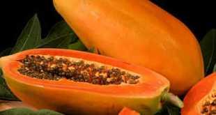 Đu đủ cung cấp ít năng lượng và chứa nhiều chất dinh dưỡng rất phù hợp với chế độ giảm cân.