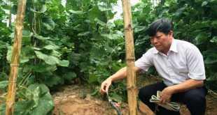 Từng gốc cây được cung cấp nước bằng hệ thống tưới nhỏ giọt