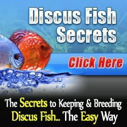 Tropical Fish Care Tips for a Prettier, Healthier Tank