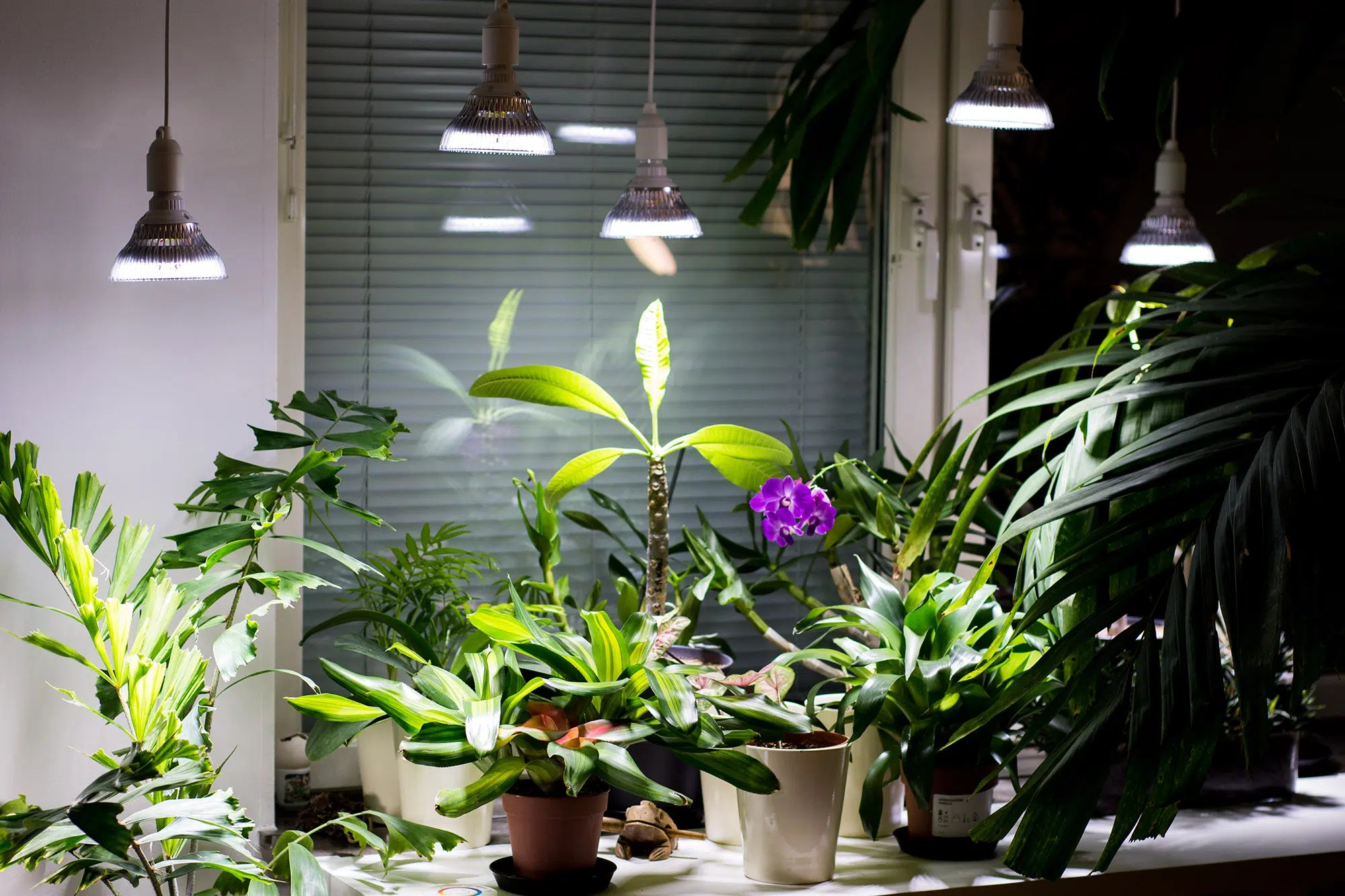 Grow Lights For Indoor Plants Let It Be Light Led Grow Lights Led And Cfl Lamps For