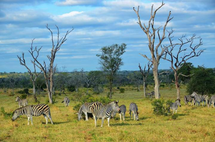 Kruger National Park, South Africa, travel, TropicsGourmet