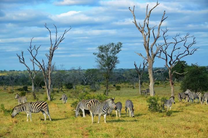 Kruger National Park, South Africa, travel, TropicsGourmet