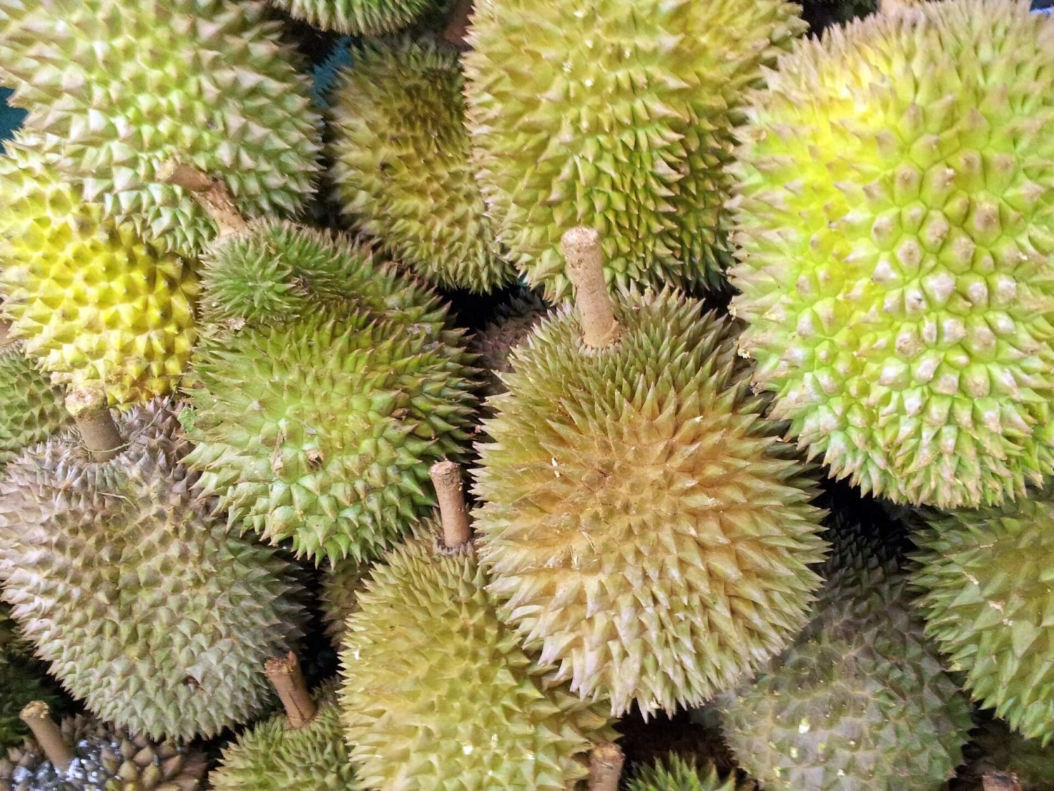 Durian, tropical fruit, tropicsgourmet, stinky fruit