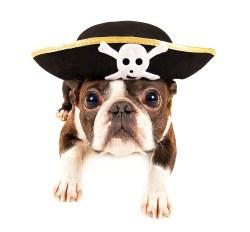 Small Of Why Do Dogs Bury Bones
