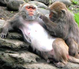 Formosan macaque Dont Monkey With My Hormones Bioidentical