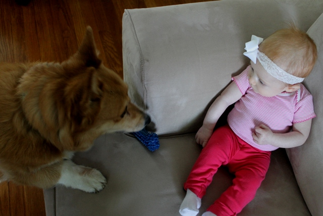 Baby Girl and Her Corgi