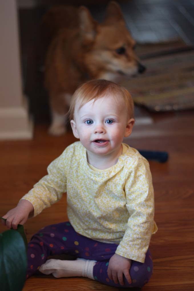 Nine Month Old and Her Corgi