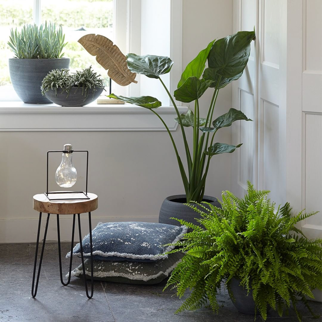 Http://interieur-tips.nl Img 8078 Welke Planten In De Vensterbank Ts Collection