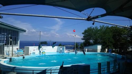 DSC 0661 500x281 のとじま水族館のイルカショーが楽しい♪宿泊は金波荘がおすすめ☆