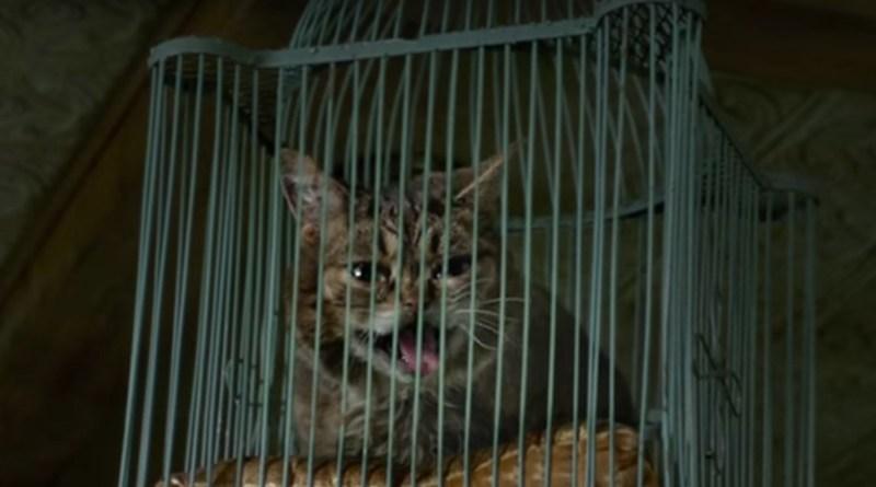 Lil Bub in Nine Lives