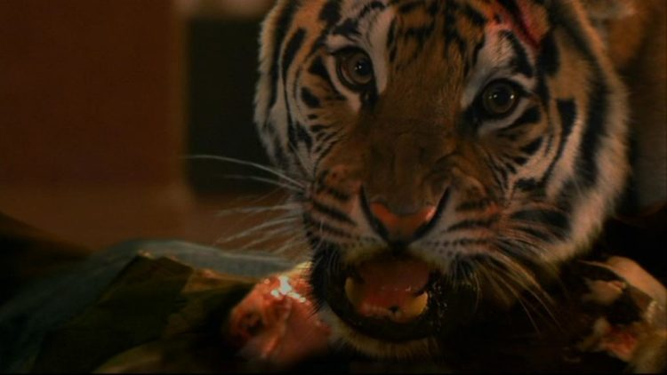 When Animals Attack ... on Tubi TV: Burning Bright