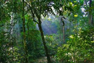 Lawachara Rain Forest - Deep into the Forest