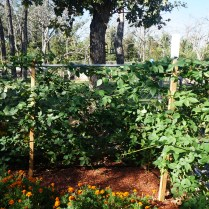 20141017 Berry Beds 006