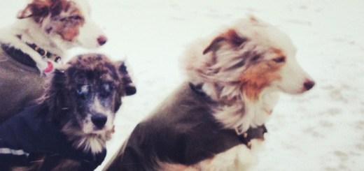 TN_winter_pups_720x340_F