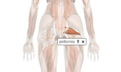 zygotebody piriformis