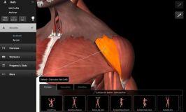 iMuscle 2: Descubre nuevos ejercicios y planifica tus entrenamientos con esta app