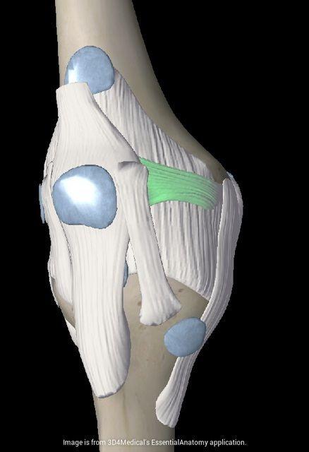 ligamentos-rodilla